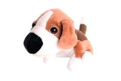 Filhote de cachorro do brinquedo fotografia de stock