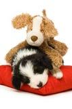 Filhote de cachorro do Collie de beira Foto de Stock Royalty Free