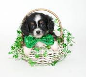 Filhote de cachorro do dia de St Patrick foto de stock royalty free