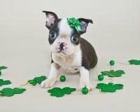 Filhote de cachorro do dia de St Patrick Imagem de Stock Royalty Free