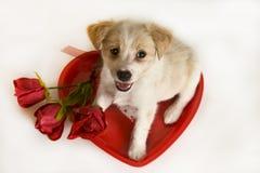 Filhote de cachorro do dia do Valentim com coração e rosas Imagem de Stock Royalty Free