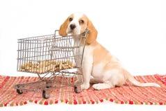 Filhote de cachorro do lebreiro com o mini carro de compra Foto de Stock Royalty Free