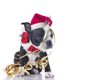 Filhote de cachorro do Natal Fotografia de Stock
