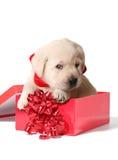 Filhote de cachorro do Natal Imagens de Stock Royalty Free