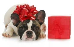 Filhote de cachorro do Natal Fotos de Stock