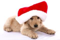 Filhote de cachorro do Natal Foto de Stock