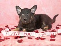 Eu te amo filhote de cachorro Imagens de Stock