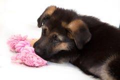 Filhote de cachorro do pastor alemão que joga com corda cor-de-rosa Imagem de Stock Royalty Free