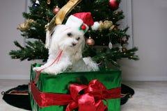 Filhote de cachorro do presente imagens de stock royalty free