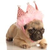 Filhote de cachorro do Pug com tiara cor-de-rosa fotos de stock royalty free