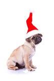Filhote de cachorro do Pug que desgasta um chapéu de Santa Foto de Stock Royalty Free