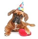 Filhote de cachorro do pugilista no tampão do partido com coração vermelho Fotografia de Stock Royalty Free