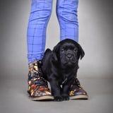 Filhote de cachorro do retriever de Labrador Imagem de Stock Royalty Free