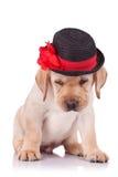 Filhote de cachorro do retriever de Labrador que desgasta um chapéu Imagens de Stock