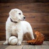 Filhote de cachorro do retriever dourado fotos de stock