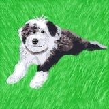 Filhote de cachorro do Sheepdog que encontra-se na grama imagem de stock royalty free