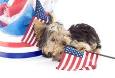 Filhote de cachorro do terrier de Yorkshire com tema patriótico Fotografia de Stock