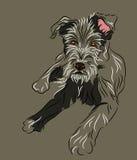 Filhote de cachorro do Wolfhound que encontra-se para baixo Fotos de Stock