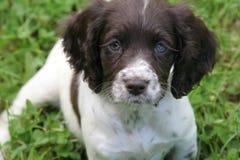 Filhote de cachorro doce fotografia de stock