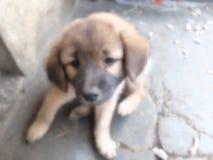 Filhote de cachorro doce Imagens de Stock