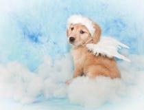 Filhote de cachorro doce do anjo Foto de Stock Royalty Free