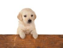 Filhote de cachorro e cerca Imagens de Stock Royalty Free