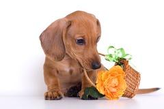 Filhote de cachorro e cesta imagens de stock