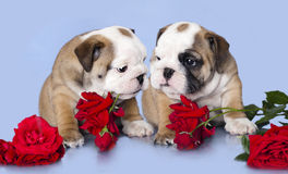 Filhote de cachorro e flores imagem de stock royalty free