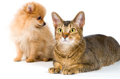 Filhote de cachorro e gato imagem de stock royalty free