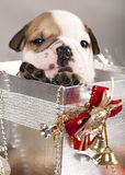 Filhote de cachorro e Natal dos presentes Fotos de Stock Royalty Free