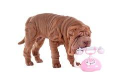 Filhote de cachorro e telefone de Shar-pei Fotografia de Stock Royalty Free