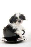 Filhote de cachorro em um copo Fotografia de Stock Royalty Free