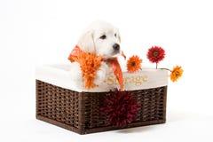 Filhote de cachorro em uma caixa imagem de stock