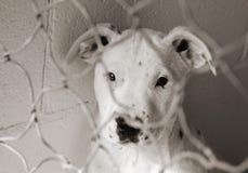 Filhote de cachorro em uma pena Fotografia de Stock Royalty Free