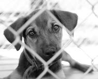 Filhote de cachorro em uma pena Imagens de Stock Royalty Free