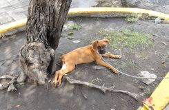 Filhote de cachorro encantador Fotografia de Stock Royalty Free