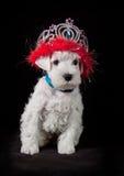 Filhote de cachorro engraçado Imagem de Stock Royalty Free