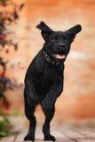 Filhote de cachorro engraçado Fotografia de Stock Royalty Free