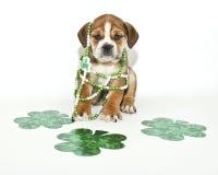 Filhote de cachorro engraçado do dia do St Patricks Fotos de Stock Royalty Free