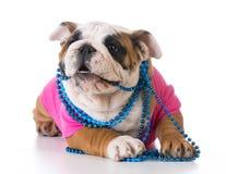 Filhote de cachorro fêmea Imagem de Stock Royalty Free