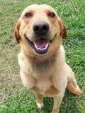 Filhote de cachorro feliz Imagem de Stock