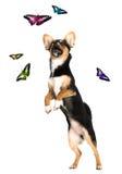 Filhote de cachorro isolado no branco Imagens de Stock
