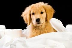 Filhote de cachorro macio na pilha do papel higiénico Fotos de Stock