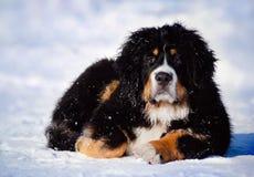 Filhote de cachorro macio que encontra-se no inverno Fotografia de Stock