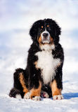 Filhote de cachorro macio que senta-se no inverno Fotos de Stock Royalty Free