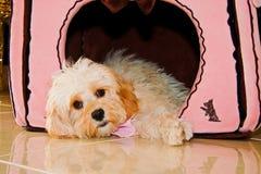 Filhote de cachorro na casa de cão imagem de stock