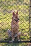 Filhote de cachorro na cerca Fotos de Stock Royalty Free