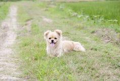 Filhote de cachorro na grama Imagem de Stock