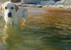 Filhote de cachorro na praia Fotos de Stock