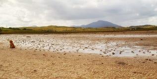 Filhote de cachorro na praia de Carrigart, Co Donegal, Irlanda imagens de stock